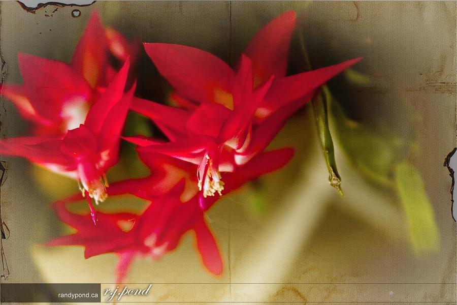 ~ 103/365 Flower Power ~