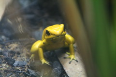 """Frog 5 • <a style=""""font-size:0.8em;"""" href=""""http://www.flickr.com/photos/30765416@N06/4528585885/"""" target=""""_blank"""">View on Flickr</a>"""
