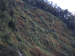 IMG_6580 moss covering sheer rockface (drayy) Tags: ocean park trip travel cruise newzealand cloud mountain holiday mountains rain rock clouds boat waterfall rocks cloudy national rainy waterfalls nz southisland tasmansea doubtfulsound fiordland fiordlandnavigator