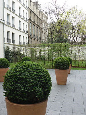 jardin hôtel geoffrin.jpg