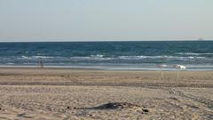 Umbrellas (¡Carlitos) Tags: sea beach sonora mexico hotel mar playa rockypoint mayanpalace puertopeñasco