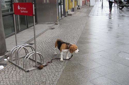 Wartender Hund, Torstraße