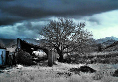 There's nothing but fear, here. (ColdSummerPics) Tags: house tree abandoned dark ir casa mood fuji decay fear filter infrared 5600 albero hdr filtro paura abbandonato 3xp infrarosso highdinamicrange 760nm coldsummerpics salvobombara