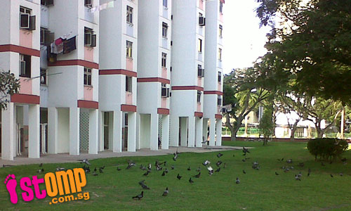 TC and NEA have yet to solve pigeon population problem