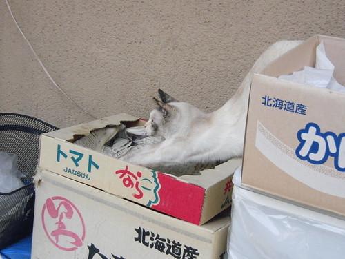 Today's Cat@2010-05-03