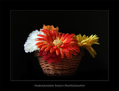 Good Morning (Harvarinder Singh) Tags: flowers elinchrome harvarindersingh