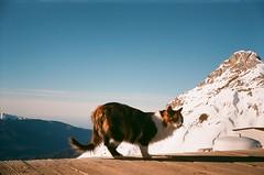 24160005 (lucius_kobbit) Tags: winter mountains color 2009 smena 2010 sochi