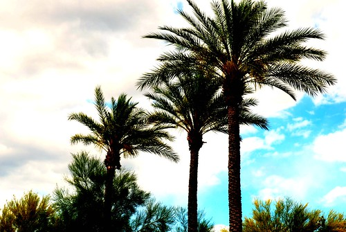 Arizona Desert Skyline