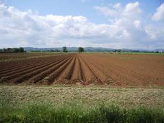 IMGP0009 (gzammarchi) Tags: italia nuvola natura campagna paesaggio pianura imolabo solco campoarato casolacanina
