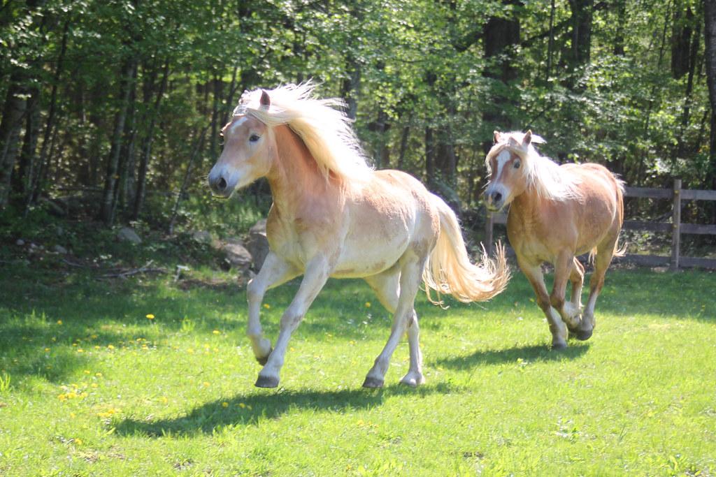 horses 189x