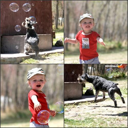 Bubble collage 2