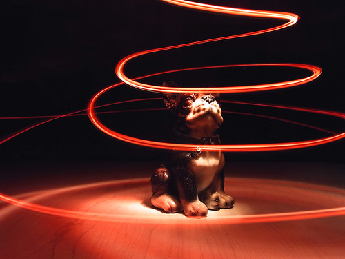 Dog 03 / Light Painting