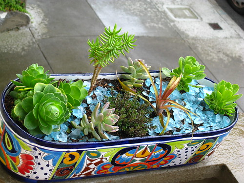 Click image to the Flickr screen fro plant ID