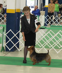 Best of Breed-Oshkosh
