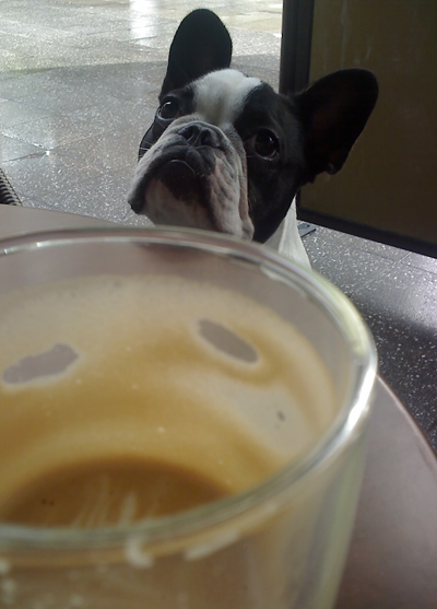 scampi wants a coffee