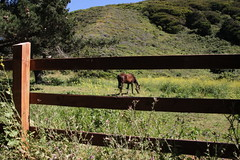 Another random horse (Michael.Lang) Tags: travel camping bigsur carmel pfeifferstatepark grx