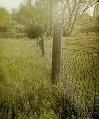 one moment more (jssteak) Tags: trees summer grass vintage fence colorado glare post cottonwood aged friday posts barbwire distressed fauxvintage fencefriday fencedfriday