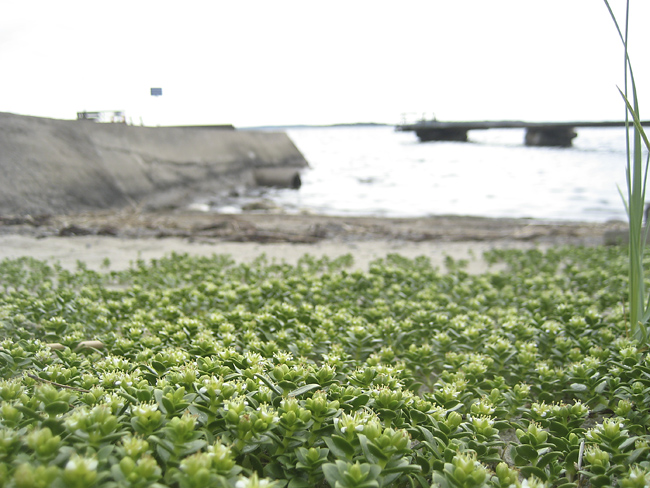 grön strand