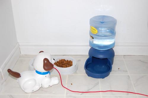 feeding puppy