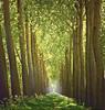 Infinity (Vainsang) Tags: trees tree canal nikon footpath sentier flanders vlaanderen mywinners abigfave d40x ysplix paololivornosfriends saariysqualitypictures updatecollection