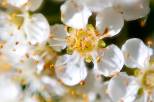 Flower Macro 10