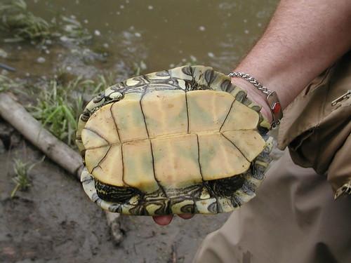 turtle06-08-10krsp