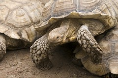 """MD- Catoctin - super turtle • <a style=""""font-size:0.8em;"""" href=""""http://www.flickr.com/photos/30765416@N06/4687868697/"""" target=""""_blank"""">View on Flickr</a>"""