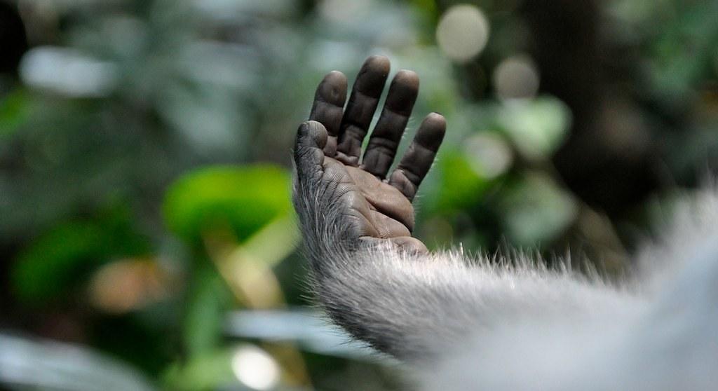 Monkey Forest, Ubud, Bali 041