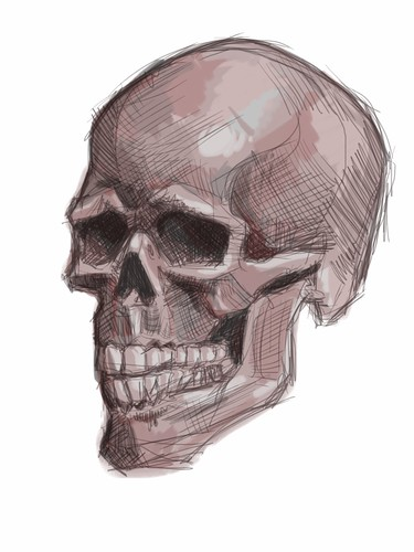 live sketching of skull on iPad - 2