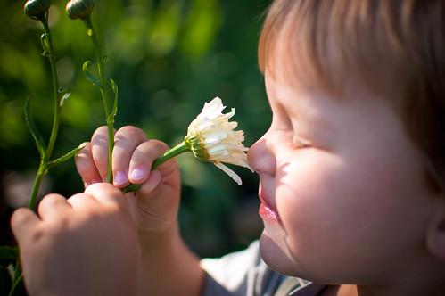 484b:1000 Lucas loves daisies