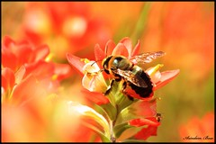 Busy Bee . . .