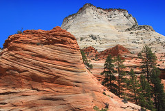 Layers of Sandstone 2, Zion National Park, Utah (Damon Tighe) Tags: red orange usa white america utah nationalpark sandstone desert nps north northamerica layers zion layering