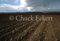 Agri Field, CA (Chuck Eckert / Chicago & Beyond) Tags: production farming grow prepped land farm fertile crops field rows agriculture watsonville dirt farmland weather plow plant salinasvalley food soil prepared climate california cumulus clouds usa