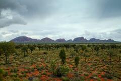 Kata Tjuta - Australia