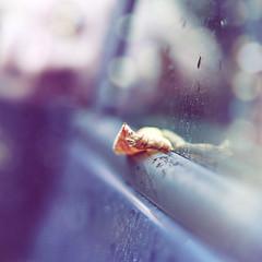 Sospensione... (mickiky) Tags: auto autumn window car rain leaf drops october bokeh foglia autunno pioggia ottobre gocce finestrino