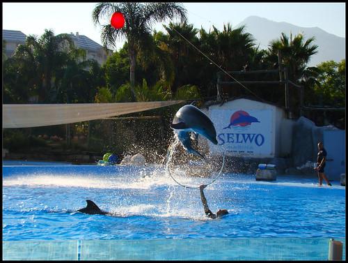Espectáculo Delfines (4)