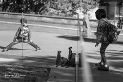 Splits (Karen Miller Photography) Tags: zoo edinburghzoo captivity captive edinburgh meerkat monochrome animal nikon rzss scotland enclosures karenmillerphotography