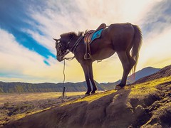 The Mountains are Calling... (Dinozauw) Tags: horse horseriding mare animal nature outdoor sunrise sky clouds mountbromo mountain tenggermassif backlit pony indonesia eastjava tamron14150mmf3558diiii slope saddle gunung bromo bromotenggersemerunationalpark hill light glow sun shadows sunny