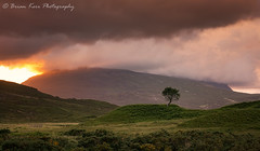 Quinag - The Tree (.Brian Kerr Photography.) Tags: scotland scottish scottishlandscapes scottishhighlands scotspirit tree assynt highlands sony a7rii landscapephotography outdoor outdoorphotography nature natural naturallandscape briankerrphotography quinag beautiful stunning sunset photography inchnadamph