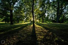 The Sunrise in the Park (ristic.vedran42) Tags: osijek croatia uwa samyang 10mm nikon d3200 tree park shadow silhouette sunrise nature