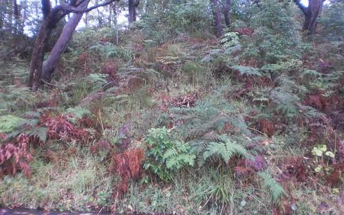 25 James Scott Crescent, Lemon Tree Passage NSW