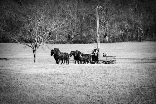 horses_bw