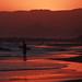Sunset Surf Fisherman