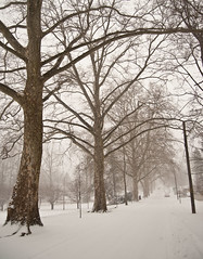 (nardell) Tags: winter snow snowstorm pa snowing blizzard westchester snowscenes