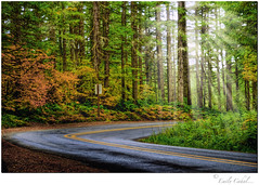 Oregon RainShine (Today'sAddiction) Tags: road trees sun rain oregon silverfalls platinumheartaward