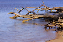 I Touched The Sound Of Silence (Mona Hura) Tags: santa county tree beach water dead islands bay sand gulf florida live sandy salt roots rosa national salty silence fallen sound limbs care oaks breeze dying naval seashore pensacola touched died guld strife 7304