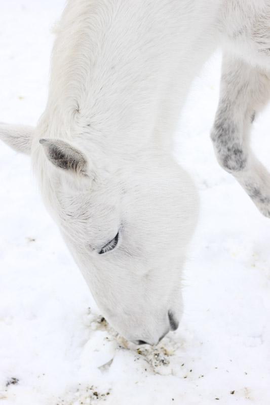 White, white, white (by KansasA)