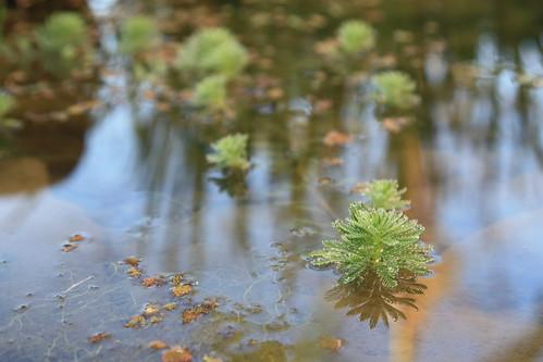 池塘裡都是蛙叫