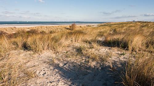 Coastline of The Netherlands