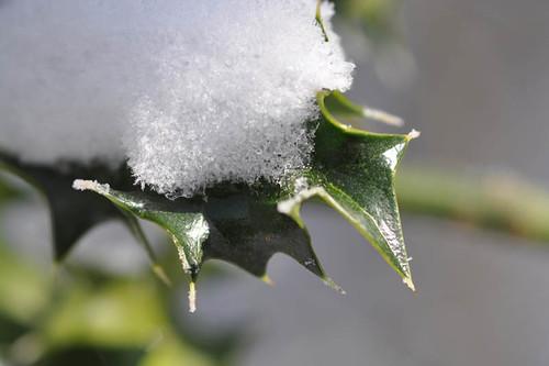 holly snow